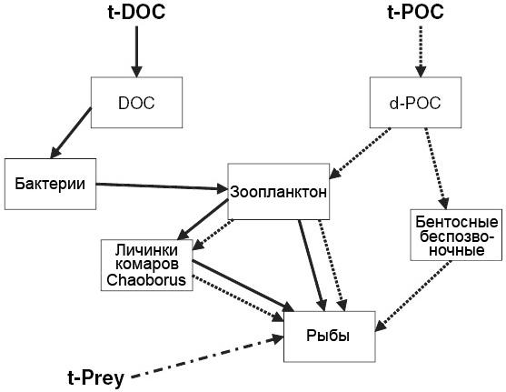 Схема основных путей переноса