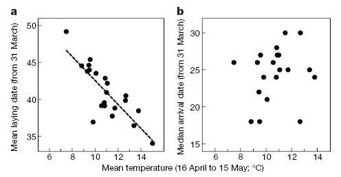 Зависимость даты откладывания мухоловками яиц(a) и даты прилета мухоловок(b) от средней температуры конца апреля— начала мая. Обе даты— средние значения числа дней после 31марта (график из статьи: Both C., Visser M.E. Adjustment to climate change is constrained by arrival date in a long-distance migrant bird// Nature. 2001. V.411. P.296-298)