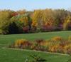 Чем разнообразнее бактерии, живущие на листьях, тем продуктивнее растительное сообщество