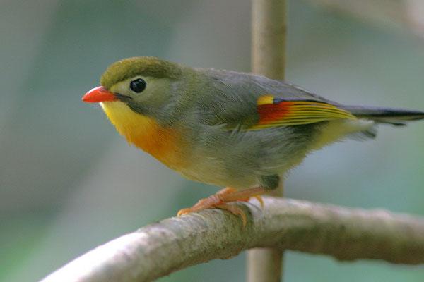 Орнитологи и просто любители птиц со всего мира могут радоваться- теперь...