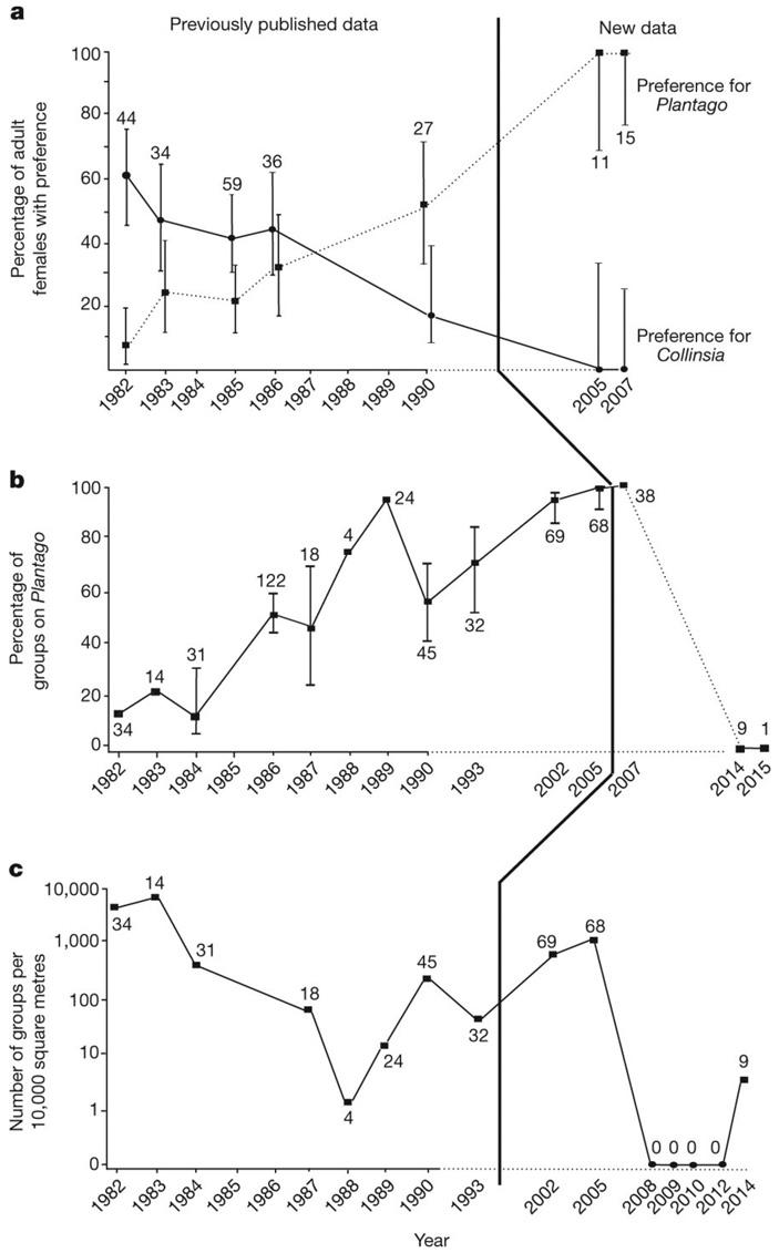 Рис. 2. Переход бабочек на новое кормовое растение и последующее вымирание популяции