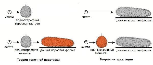 Рис.3. Теория конечной надставки и теория интеркаляции.