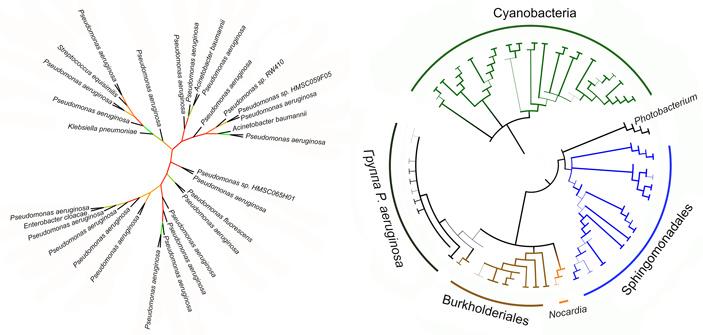 Зачем бактериям и простейшим липоксигеназы?