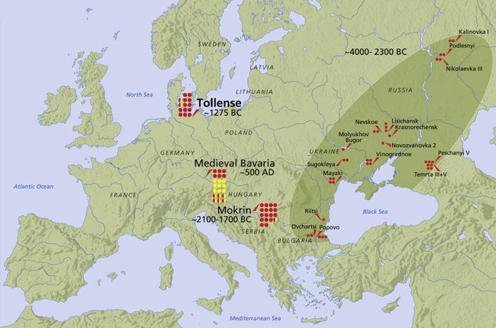 Ген переносимости лактозы распространился среди европейцев за последние три тысячи лет