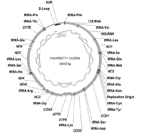 http://elementy.ru/images/news/mammoth_genom.jpg