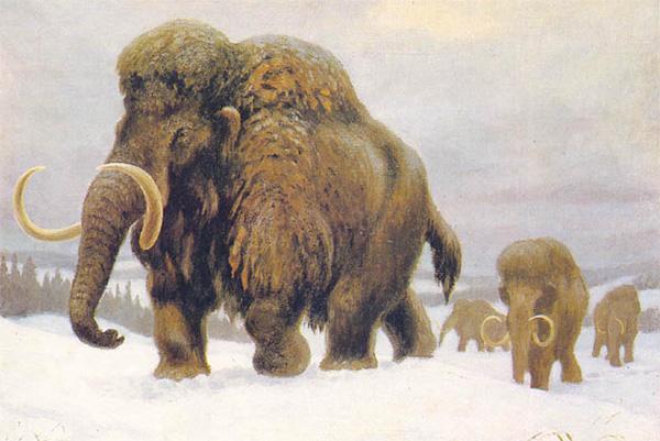 Мамонты зимой. Картина палеонтолога и художника Константина Константиновича Флёрова (1904–1980)