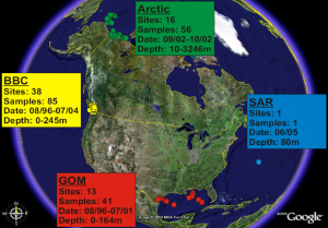 Точки, где были взяты пробы для вирусологического метагеномного анализа. В прямоугольниках указаны районы— Арктика, Саргассово море (SAR), Мексиканский залив (GOM), Британская Колумбия (BBC), а также число точек и проб, даты и глубины. Рис. из обсуждаемой статьи в PLoS Biology