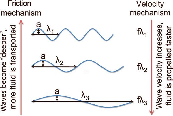 Рис. 4. Гипотеза двух разнонаправленных тенденций