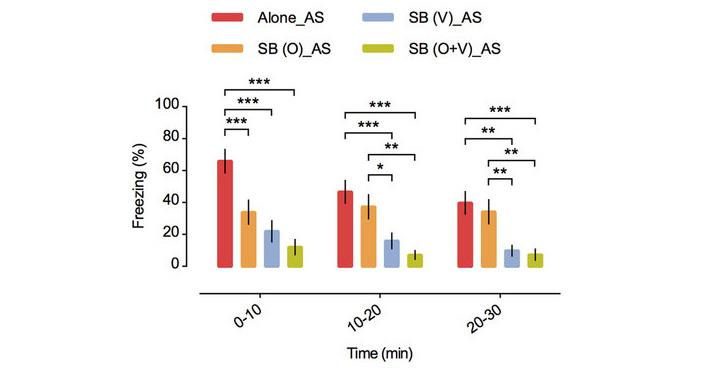 Доля эпизодов замирания вразных условиях: если рыбка переживает тревогу(AS) водиночестве (Alone), вприсутствии социального стимула(SB)— визуального(V), обонятельного(О) или обоих вместе(O+V)