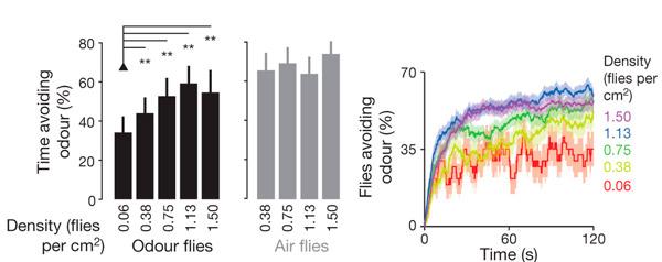 Рис. 3. Зависимость реакции на запах от числа мух