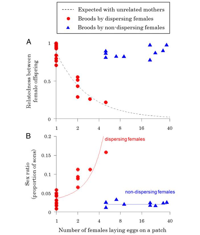 Рис. 4. Связь числа самок, откладывающих яйца в одну личинку вида-хозяина, и характеристик потомства