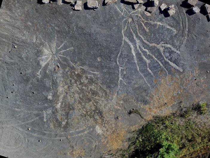 На востоке США обнаружены древнейшие корни «настоящих» деревьев археоптерисов