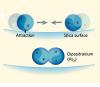 Поверхность кварцевой пленки поглощает лишнюю энергию, позволяя двум атомам позитрония объединиться вмолекулу— хоть и на мгновение. Изображение из статьи Clifford M. Surko. Atomic physics: Awhiff of antimatter soup (Nature. V.449. P.153–155)
