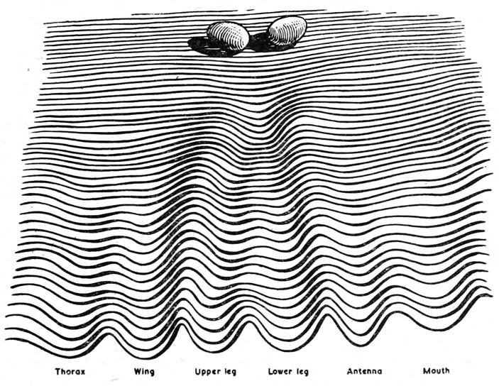 Рис. 2. Эпигенетический ландшафт Уоддингтона