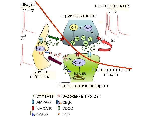 Сводная схема молекулярных