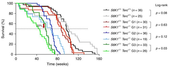 Рапамицин не продлевает, асокращает жизнь мышам скороткими теломерами