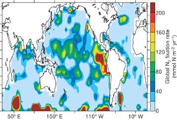 Рис 4. Распределение интенсивности азотфиксации (микромольN2/м2 в год) по акватории Мирового океана. Азот связывается там, где интенсивно идет денитрификация. Рис. из обсуждаемой статьи в Nature