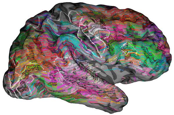 Создан семантический атлас человеческого мозга