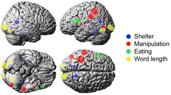 Семантическая репрезентация слов в мозгу по данным исследования M. A. Just et al.
