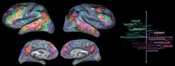 Семантические области в мозгу одного из участников эксперимента