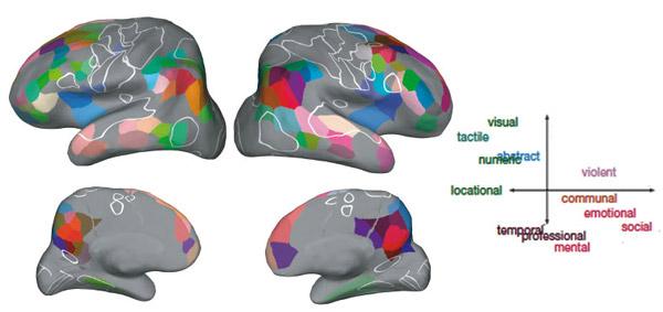 Усредненное расположение двенадцати семантических областей в коре мозга для семи испытуемых по данным фМРТ