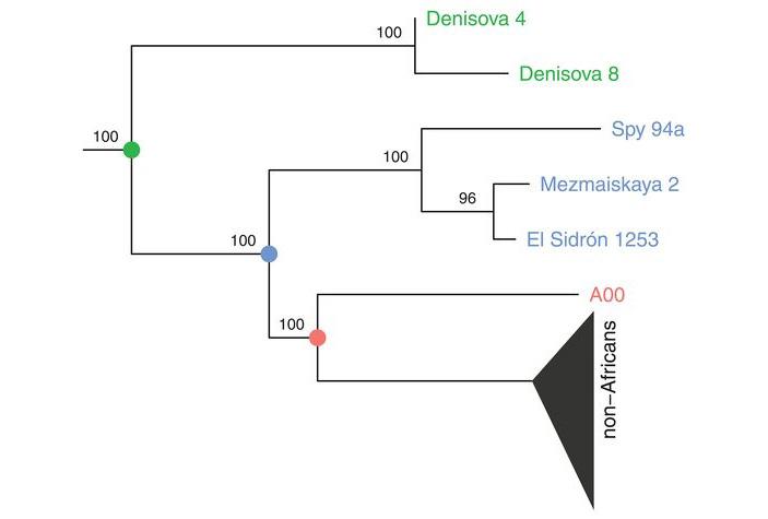 Рис. 3. Филогенетическое дерево, построенное по фрагменту Y-хромосомы