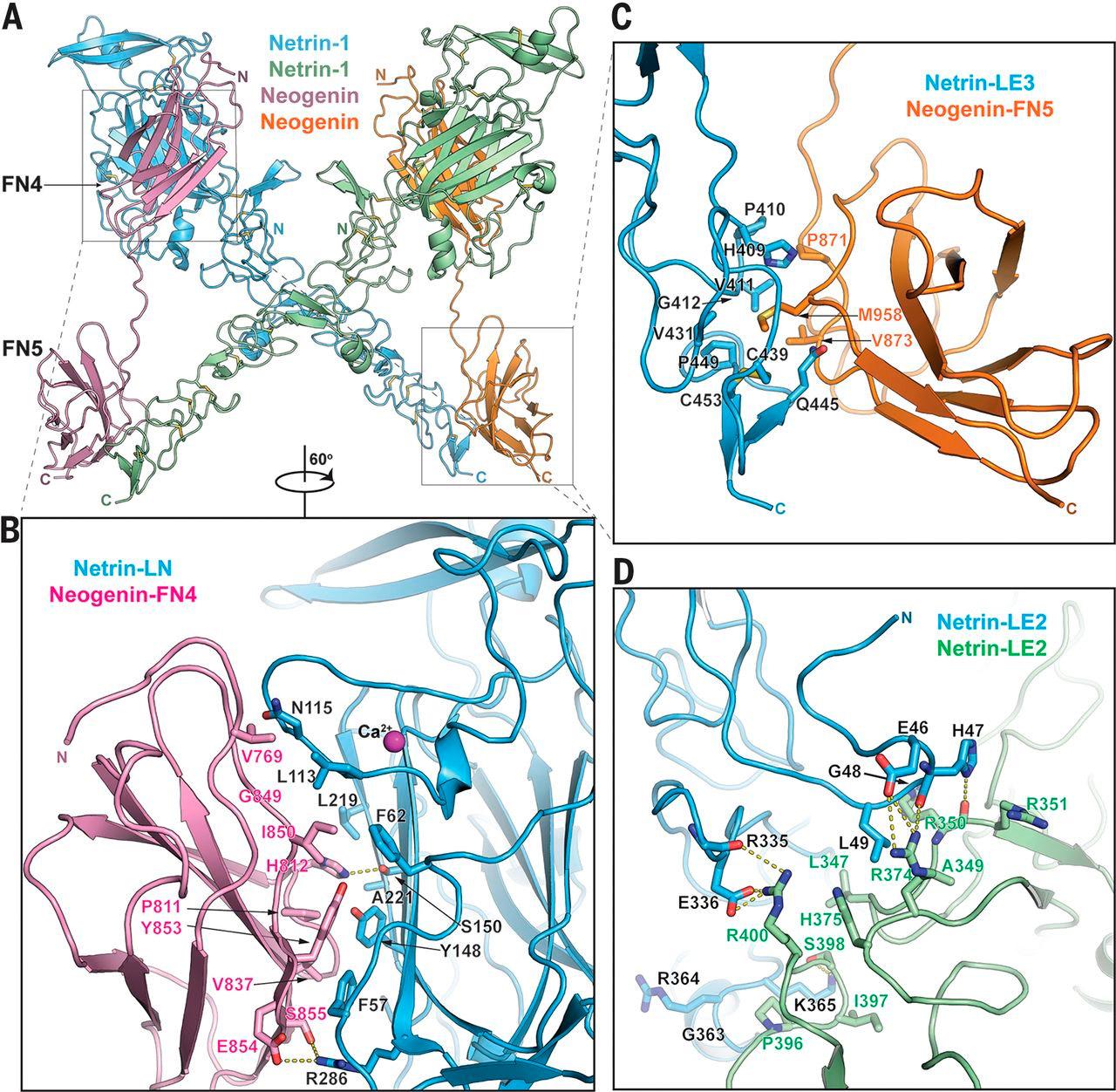 повижное белка схема