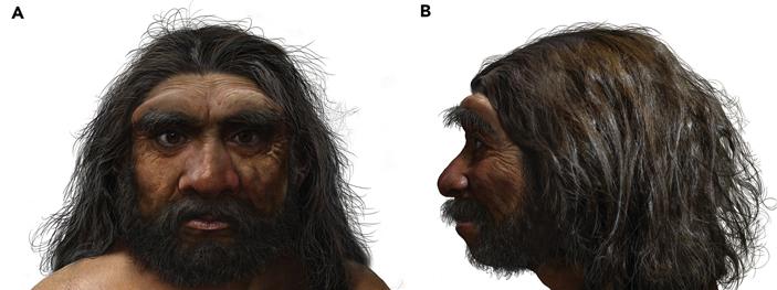 Рис. 9. Реконструкция облика харбинского человека