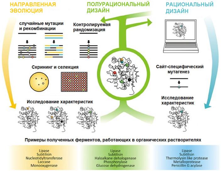 Рис. 4. Схема процессов, используемых в белковой инженерии