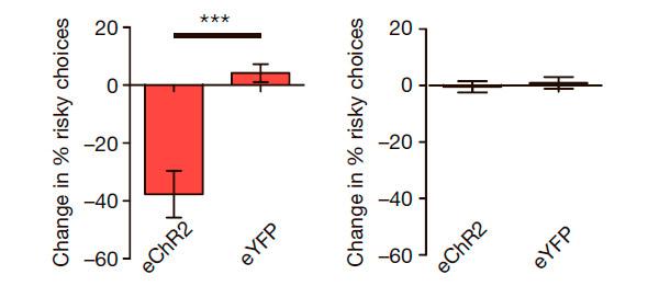 Рис. 3. Изменения в поведении при стимуляции нейронов D2