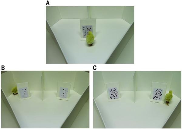 Схема второго эксперимента