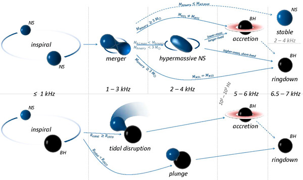 Рис. 10. Возможные сценарии слияния нейтронной звезды с другой нейтронной звездой или с черной дырой