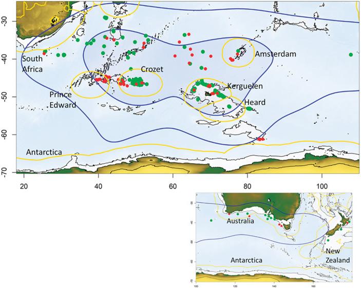 Альбатросы помогли оценить масштабы нелегального рыболовства