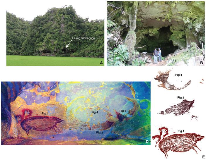 Изображения свиней впещере на острове Сулавеси созданы 45,5тысяч лет назад