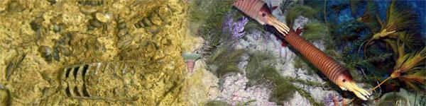 Палеонтологические данные позволяют реконструировать не только строение отдельных вымерших животных, но и некоторые свойства древних экосистем. На рисунке— морские животные ордовикского периода: головоногие моллюски и морские лилии. Слева— «исходные данные», справа— реконструкция. Изображение с сайта www.westga.edu