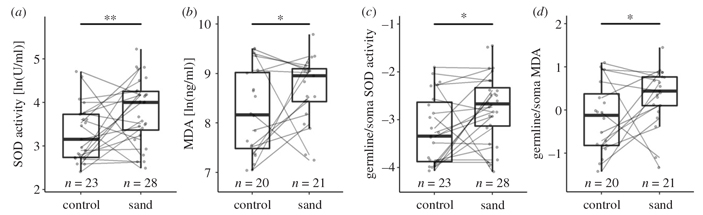 У дамарских пескороев и рабочие, и размножающиеся особи ради выживания жертвуют половыми клетками