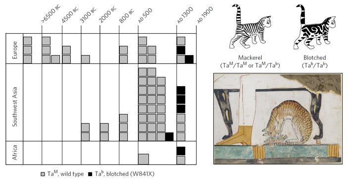 Рис. 3. Распространение аллелей гена Taqpep