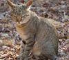 Палеогенетика помогла выяснить происхождение домашних кошек