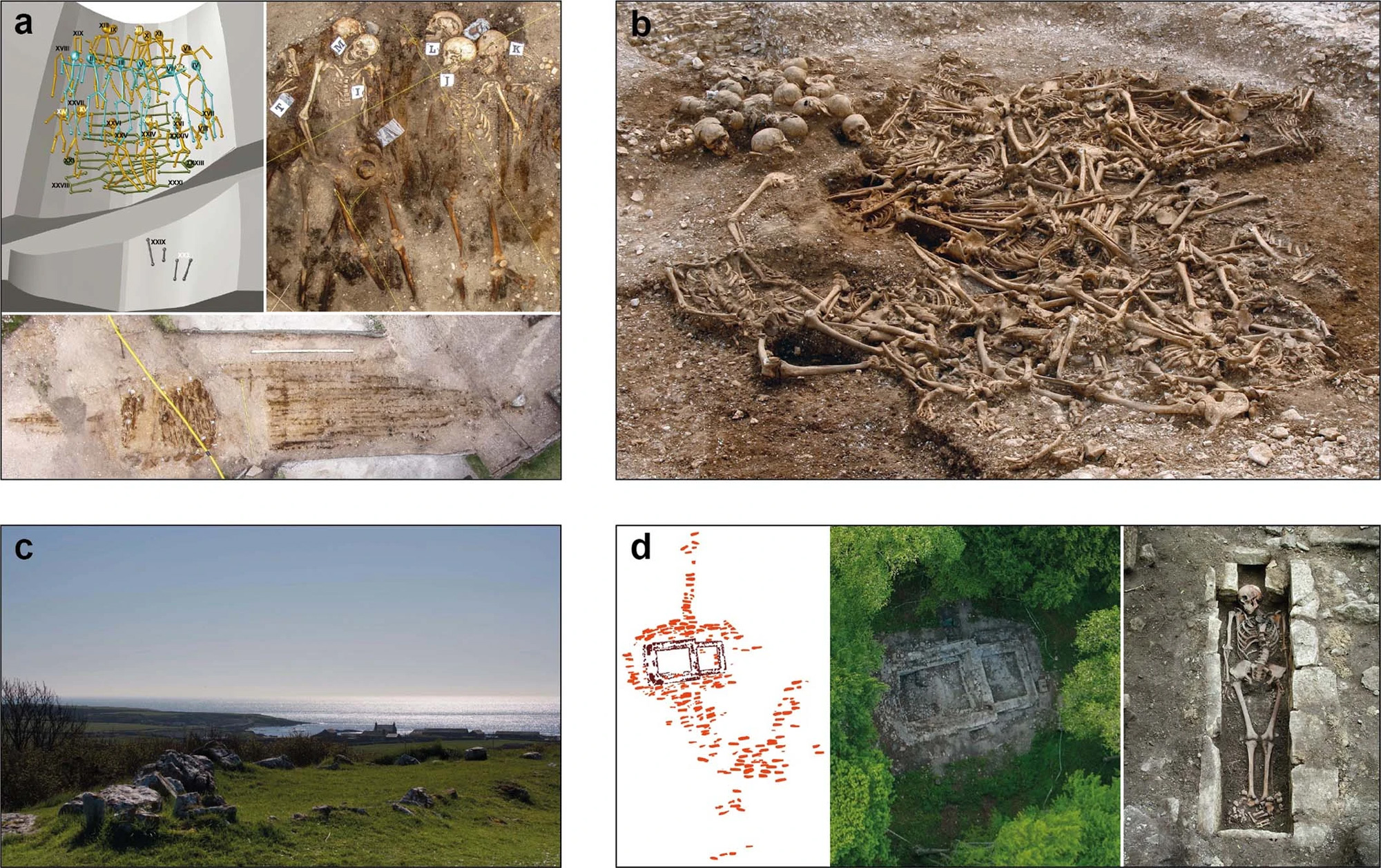 https://elementy.ru/images/news/paleogenomics_of_the_viking_world_1_2000.jpg