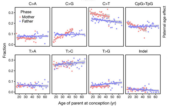 Рис. 4. Изменение относительной частоты некоторых типов мутаций с возрастом родителя