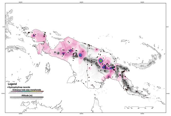 Рис. 4. Карта скорости морфологической эволюции размера входного отверстия в домации у гиднофитовых