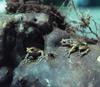 Изучены причины и следствия утраты симбиоза муравьев и растений