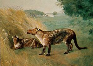 Фенакодус (Phenacodus)— один из поздних представителей кондиляртр, живший вэоценовую эпоху (56–40млн лет назад). Картина Чарльза Найта (Charles R. Knight), 1898г. Изображение с сайта cache.eb.com