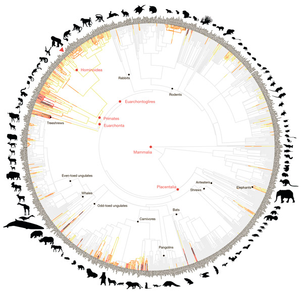 Эволюция внутривидовой летальной агрессии умлекопитающих