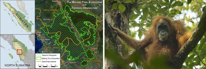 Ареал тапанульского орангутана