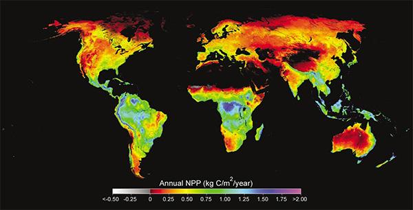 Распределение величины чистой первичной продукции (кг углерода на1кв.м загод) в 2002году