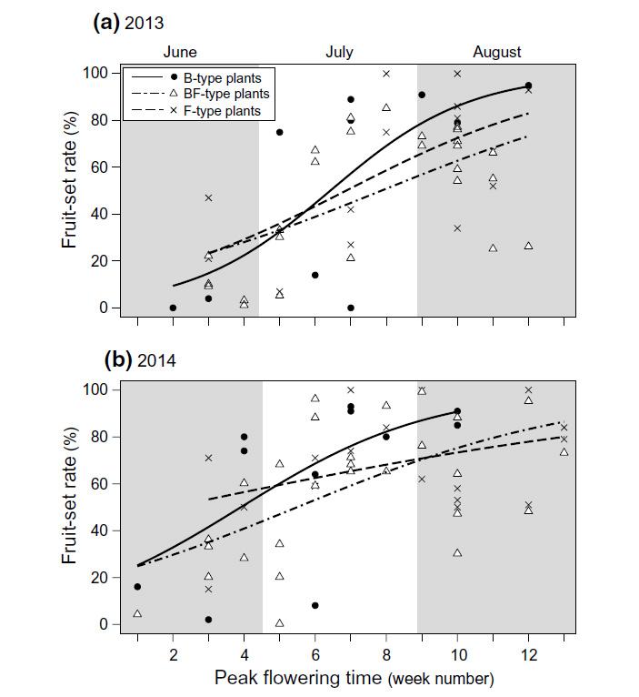 Рис. 4. Зависимость завязываемости плодов от срока цветения