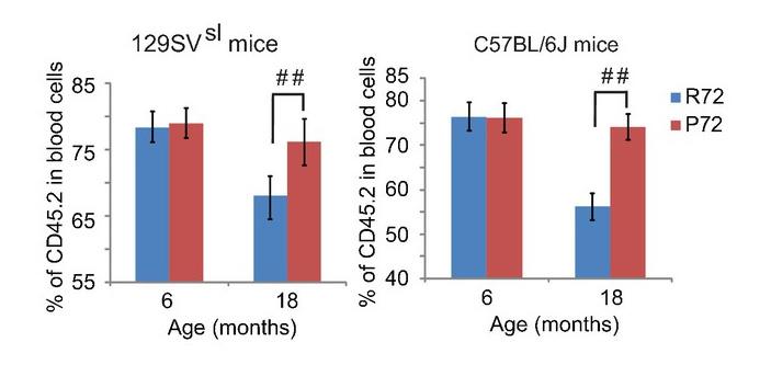 Рис. 6. Восстановление крови клетками изучаемых мышей