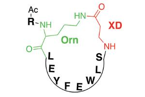 Рис. 2. Общий мотив строения синтезированных циклических пептидов