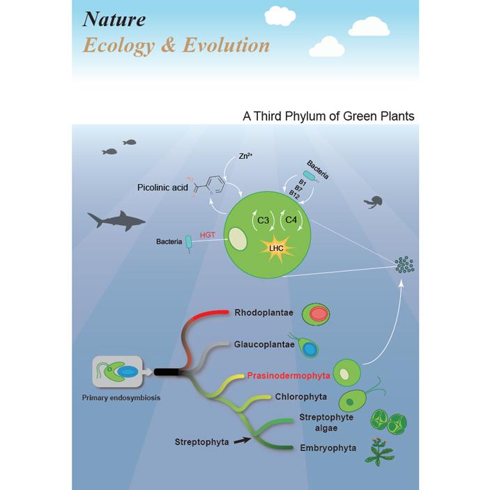 Эволюционное древо зеленых растений усложняется